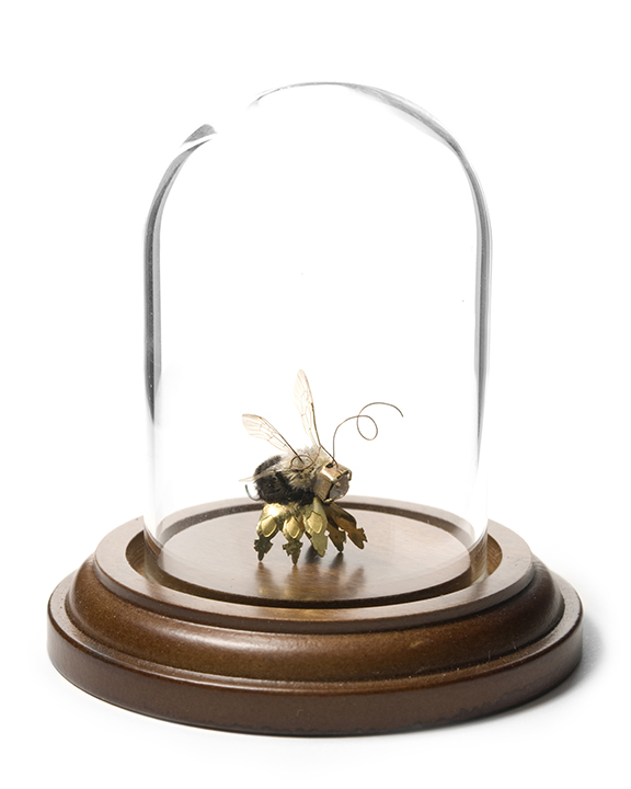 Bee Taxidermy.